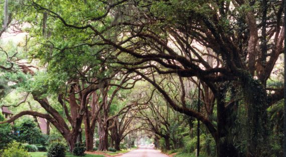The Top Things to Do Near Marion County, Florida!